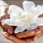 whitelotus flower